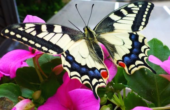 Butterfly Cry e.e 2012