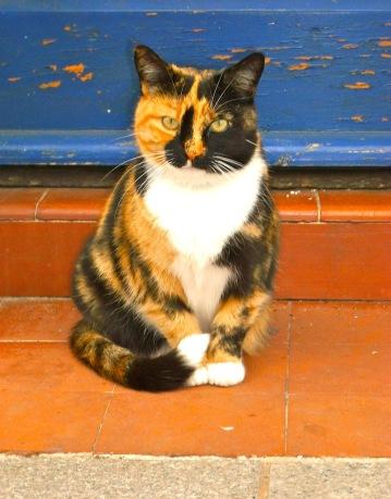 """""""Glückskatze"""", auch Tricolor-Katze oder Mi-Ke (jp.) – Felida (Exmouth/GB)"""