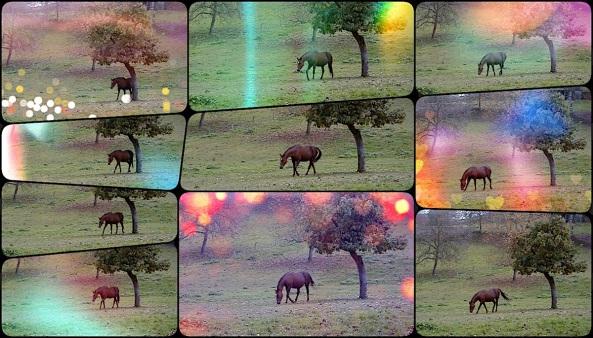 Pferd allein auf der Weide Collage web