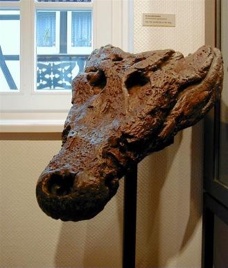 fossiler Schädel eines Krokodils