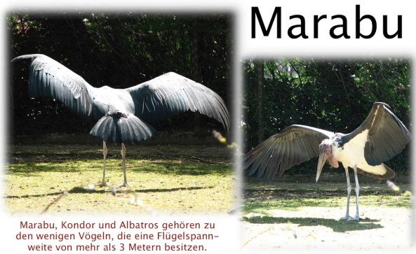 Marabu Heidelberg