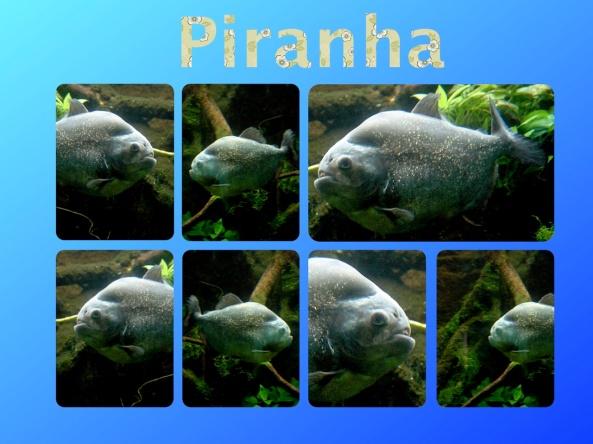 Piranha Zoo Frankfurt